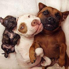 Rescue Dogs Adopt