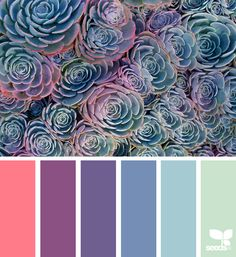 Succulent Spectrum - https://www.design-seeds.com/in-nature/succulents/succulent-spectrum