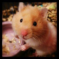 Too cute. I want!