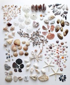∷ Variations on a Theme ∷ Collection of Shells