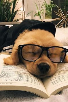 Is your dog bored? Need some easy ways to keep your dog busy indoors? Here's 9 simple games and activities you can do to keep your dog entertained and busy. Baby Animals Super Cute, Super Cute Puppies, Cute Little Puppies, Cute Little Animals, Cute Dogs And Puppies, Cute Funny Animals, Baby Dogs, Funny Dogs, Cute Babies