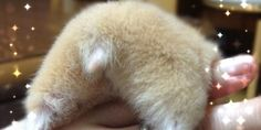 Think you're weird? Unless you're into hamster butts, you're apparently not weird enough. There's a