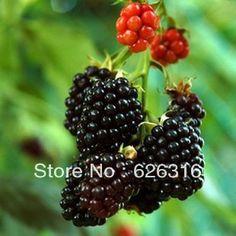 bonsai fruit - Pesquisa Google
