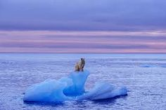 Threatened by global warming, A polar bear stands atop an iceberg near the island of Spitsbergen, in Norway's Svalbard archipelago. By Norbert Rosing. Climate Change Report, Save The Polar Bears, Sea Level, Global Warming, Photo S, How To Find Out, Water, Pictures, Outdoor