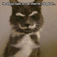 He Always Looks So Cute When He's Skeptical,  Click the link to view today's funniest pictures!