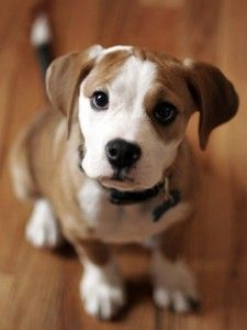 Learn how to train your dogs by learning dog training secrets, tips, tricks as well as access get access to books. This site is intended for dog lovers