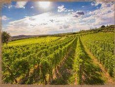 Montenigo è | Azienda Agricola Montenigo