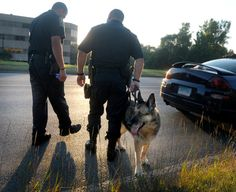 Just a few short months after her retirement, a decorated police K9 was diagnosed with terminal cancer, and before he was forced to bid her farewell, her handler took her out for one last ride in his cruiser.