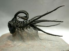 Trilobite fossil: Order Lichida, Family Odontopleuridae known as Dicranurus monstrosus