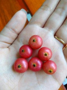 Reminder of everyone's childhood. #cherries #fruit #childhood #throwback