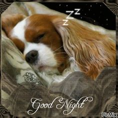 Romantic Good Night, Cute Good Night, Good Night Gif, Funny Cartoon Pictures, Gif Pictures, Images Gif, Good Night Friends, Good Night Wishes, Night Love Quotes
