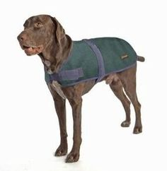 Keep your dog happy and healthy with the dog supplies they need in every stage of life. Shop for dog and puppy accessories and products securely at Petco. Dog Coats And Sweaters, Pet Coats, Waterproof Dog Coats, Puppy Supplies, Dog Raincoat, Designer Dog Clothes, Dog Boutique, Dog Jacket, Pet Travel