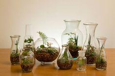 ガラスの中のミニチュアガーデン、テラリウムはいかがでしょうか。自分の好きなように鉢植えを作るのも楽しそうですね。