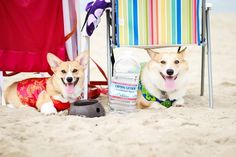 Lots of chilling. | This Is What Happens When 318 Corgis Throw A Beach Party