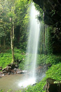 UNESCO World Heritage Site.                      Gondwana Rainforests of AUSTRALIA