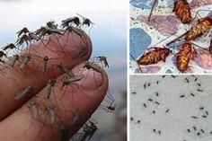 Íme egy titkos szúnyog űző módszer, ami egész nyárra nyugalmat biztosít!