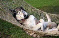 nothing cuter than a dog in a hammock.