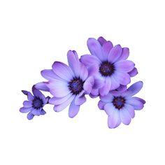 예쁜꽃포토샵자료 ❤ liked on Polyvore featuring flowers, fillers, plants, decor and flores