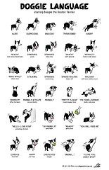 Boogie DOGGIE LANGUAGE Large Poster