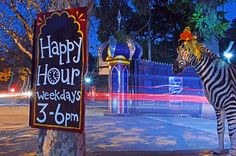 Rabbit Hole, Fair Grounds, Neon Signs, Happy, Fun, Ser Feliz, Hilarious, Being Happy