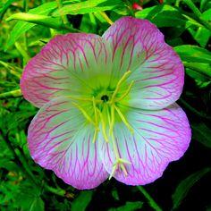 flor...