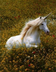 The Horse Queen, wearing the Uni-Crown; a symbol of strength and allegiance with the human kingdom.