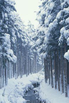 forêt sous la neige..
