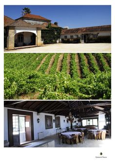 """Quinta de Pancas is situated in the Estremadura region, in the Alenquer district, 45 kilometres northeast of Lisbon and near the village of """"Pancas"""".     Dating back to the 19th century Quinta de Pancas was integrated into the company """"Companhia das Quintas"""" in 2006.  The microclimate and the west facing slopes of Quinta de Pancas create the ideal conditions for the maturation of the noble grape varieties.  Sun filled days and cool nights result in big wines with aromatic flavours and a…"""