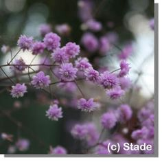 Garten Mit Schatten Pflanzen Und Blühenden Blumen | Funkien ... Welche Blumen Im Schatten Garten Pflanzen