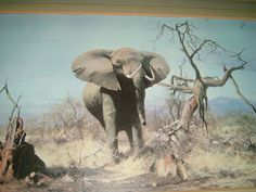Signed David Shepherd Framed Print of an Elephant Trouble Ahead - An Artist in Africa