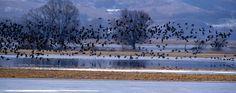 Vogelzug im Nationalpark Unteres Odertal bei Criewen © TMB-Fotoarchiv/Boldt