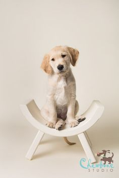 The Importance of Ordering Professional Puppy Portraits | Savage Universal