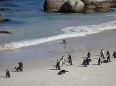 ボルダーズビーチ / Boulders Beach / 南アフリカ 南アフリカのボルダーズビーチにはアフリカペンギンが数多く生息。隣接するビーチではペンギンと一緒に泳ぐことも可能です。