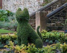 Garden Cat, Belfast Castle, Ireland