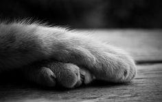 Cute kittie paws