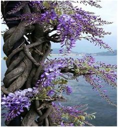 Purple Flowers, Beautiful Flowers, Beautiful Pictures, Dahlia Flowers, Purple Rose, Beautiful Landscapes, Beautiful Gardens, Flowering Trees, Nature Photos