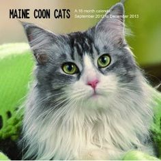 Maine Coon Cats 2013 Wall Calendar,$12.99