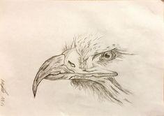 Easy Drawings, Pencil Drawings, Cute Birds, Graphite, Eagles, Tote Bag, Cards, Ideas, Dibujo
