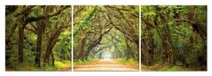 Tunnel of Trees Mounted Photography Print Triptych