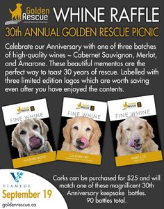 Celebrate Golden Rescue's 30th Anniversary over a nice bottle of wine!   Corks can be purchased at the picnic for $25 and will match one of these magnificent 30th Anniversary keepsake bottles. Golden Rescue is committed to your wellbeing. Please be assured that the picnic will be conducted in accordance with COVID-19 protocols, mandated by the Province at the time of the event. We will post specific guidelines as the picnic date approaches. Please let us know that you're attending by… Match One, Picnic Date, Wine Corks, 30th Anniversary, Cabernet Sauvignon, Rsvp, Bottles, Nice, Celebrities