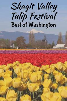 The Skagit Valley Tulip Festival is truly a sight that everyone must see. If you're visiting Seattle in April, make sure you take some time to head north to see the tulips! Check out this guide on how to get there and where to go once you're there. Skagit Valley Washington is a place you'll never forget!