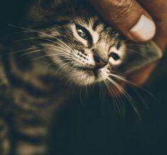 little kitten...right now I really want a kitten.