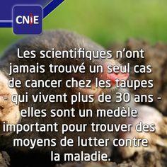 La vie est pleine de surprise et a encore beaucoup de chose a nous offrir et a découvrir. #lesaviezvous #medecine #taupe #aminal #cancer