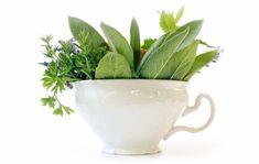 Salvia, Planter Pots, Health, Grip, Cosmetics, Medicine, Health Care, Sage, Salud