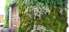 Green Roof Solutions living walls can be used to make a bold architectural statement, grow plants in a small site, and clean the interior air in a building.