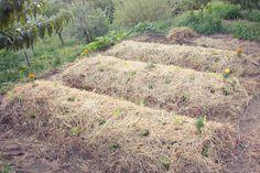 Orto sinergico invernale? Ecco i periodi per le semine e le consociazioni da evitare.