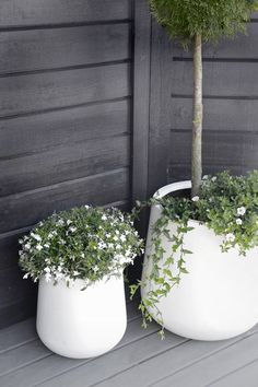 minimal white flower pots large big for flowers and trees , black and white porch garden. white flower pots large big for flowers and trees , black and white porch garden balcony white flowers Scandi minimal design Outdoor Flowers, Outdoor Planters, Outdoor Gardens, Outdoor Potted Plants, Potted Trees, Porch Garden, Garden Pots, Balcony Gardening, White Garden Fence