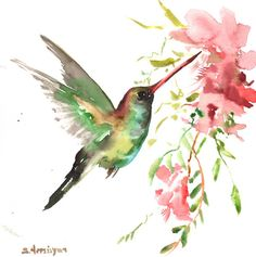 Hummingbird, original watercolor painting, 12 X 12 in. pink red green flying…