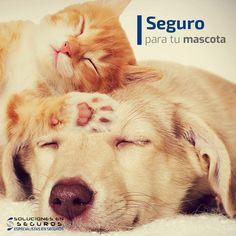 Soluciones en Afianzamiento Publicado por Youweb Me gusta esta página · 5 de abril ·    Asegura a tus mascotas con nosotros y cubre sus gastos médicos por enfermedades no prevenibles o robo con violencia.   Solicita una cotización o asesoría a la línea: 📞: (33) 3615-8939 http://solucionesenseguros.mx/