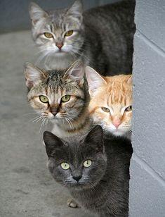 のぞき見中の4匹の猫